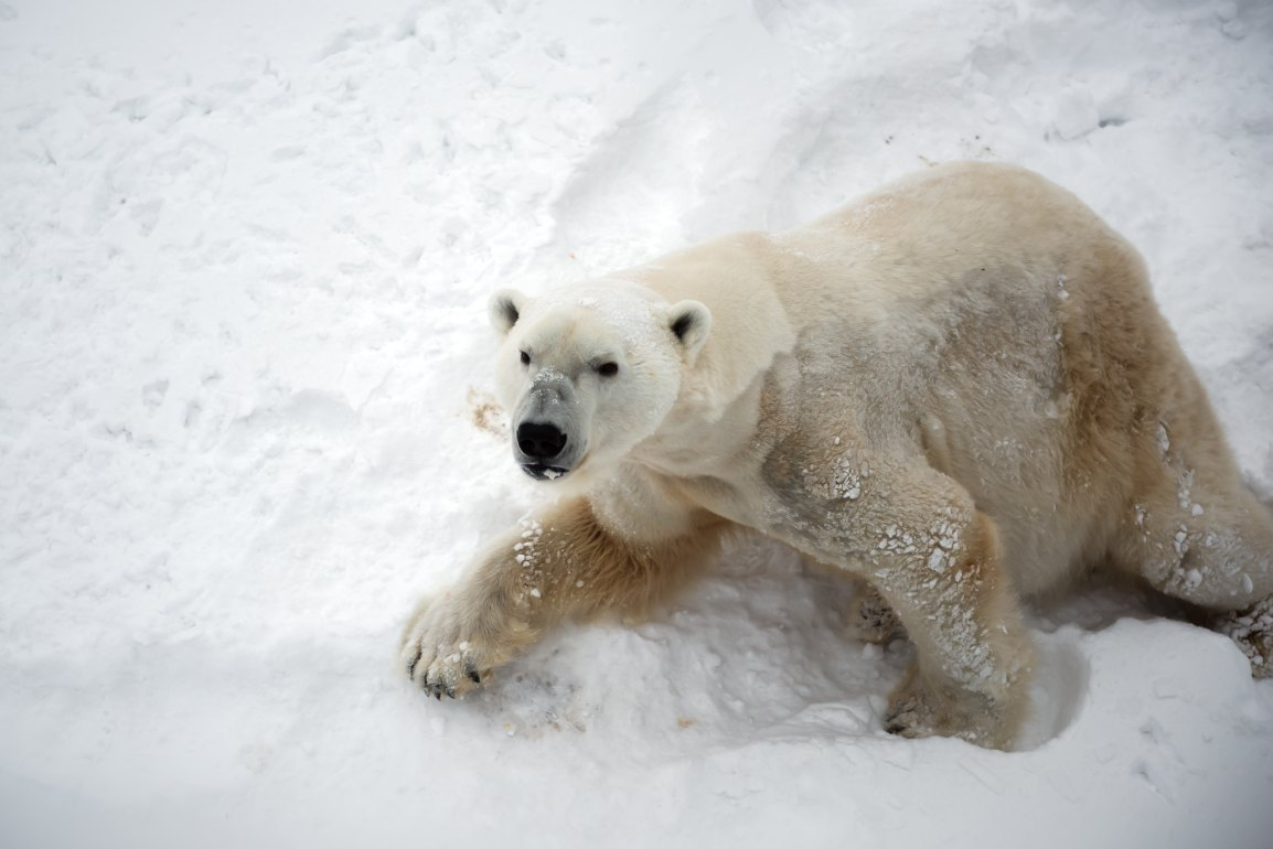 3 things you can do to help with plastic pollution on International Polar BearDay